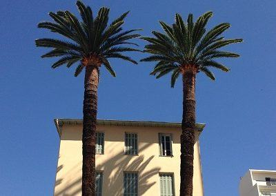 traitement des palmiers