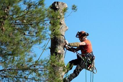 elagage arbre grasse