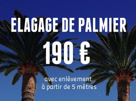 Elageur 06 elagage de palmiers