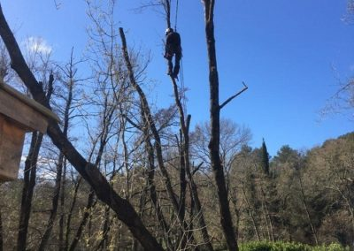 elagage d arbres antibes-06600